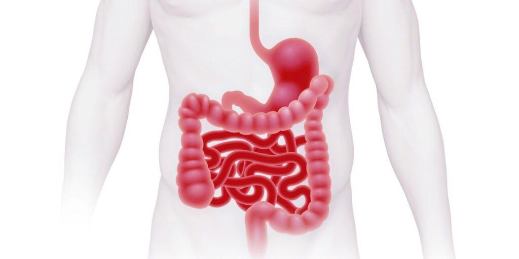 النظام الغذائي ونمط الحياة والأدوية-متلازمة القولون العصبي (IBS)